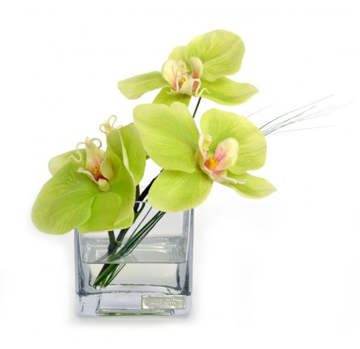 Green Phalaenopsis Glass Square
